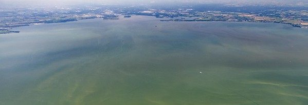 A Global Look at the Increasing Occurrence of Lethal Algae Blooms