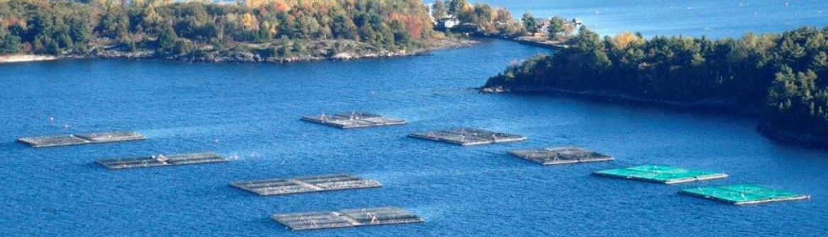 GBA Aquaculture Committee Needs Your Help