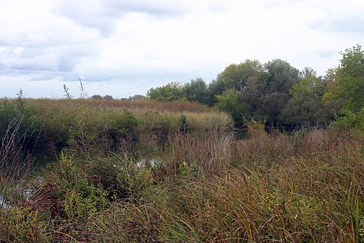 A Key Wetland is Protected From Destruction